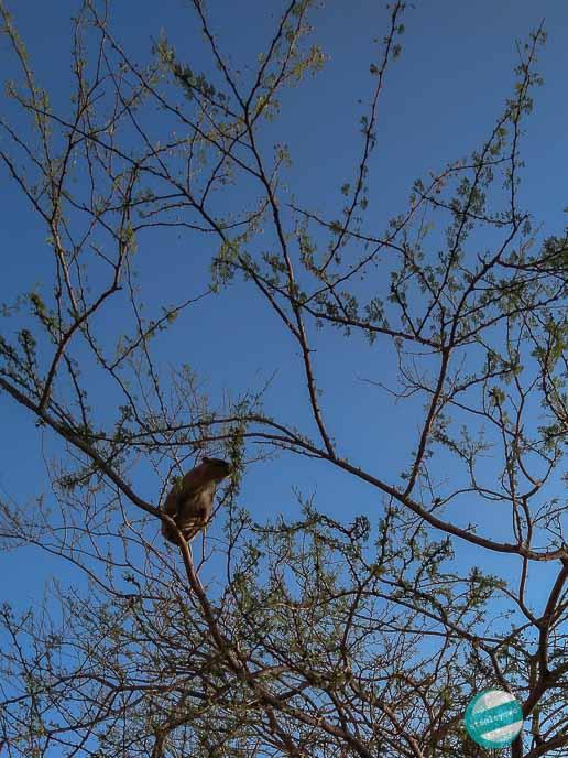 Zwiedzanie Parku Narodowego Ein Gedi